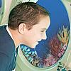 Atlantis Submarines Day Dive
